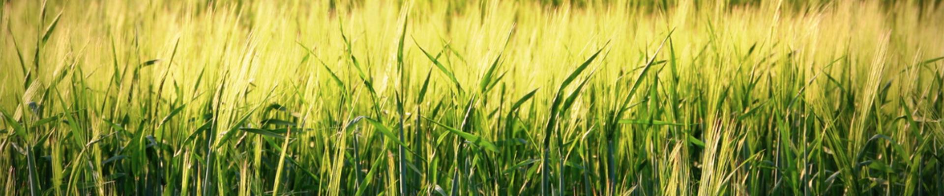 REWE Istas – Unser Bio Sortiment