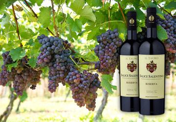 Wein des Monats im Februar 2018: Salice Salentino