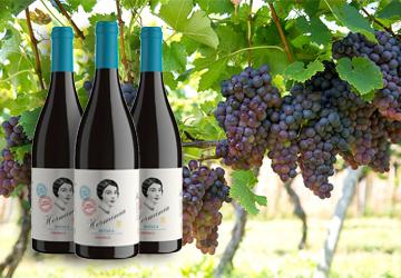 Der REWE Istas Wein des Monats Februar 2020