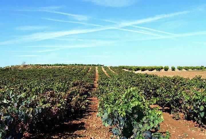 Unser Wein des Monats Juli 2019: Achkarren Grauer Burgunder