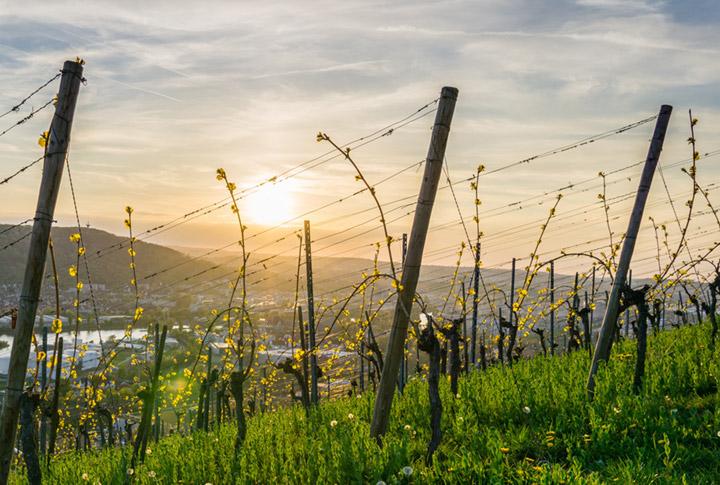 Unser Wein des Monats Juli: Sommerweisser