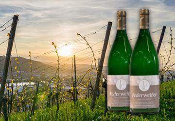 Wein des Monats Oktober 2018: Federweisser