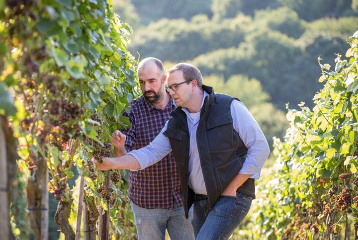 Unser Wein des Monats Oktober vom Weingut Kriechel: SPÄTBURGUNDER von der Ahr